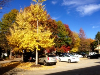 Parking Lot Autumn